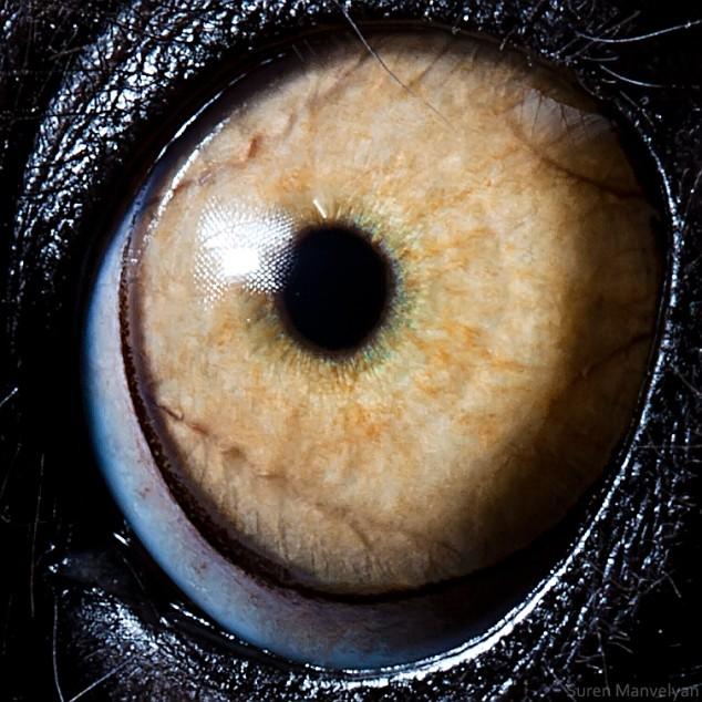 20 close-up photos of animal eyes show nature's wonderfully extreme ocular diversity Animal-Eyes-Lemur-634x634