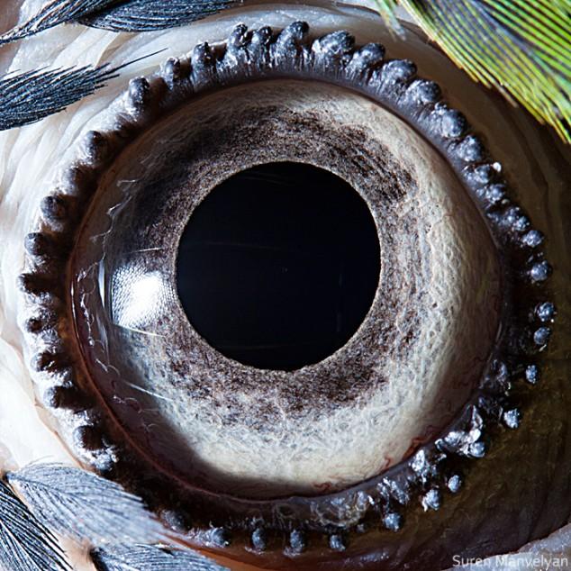 20 close-up photos of animal eyes show nature's wonderfully extreme ocular diversity Animal-Eyes-Parrot-634x634