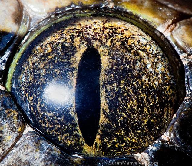 20 close-up photos of animal eyes show nature's wonderfully extreme ocular diversity Animal-Eyes-Python-634x547