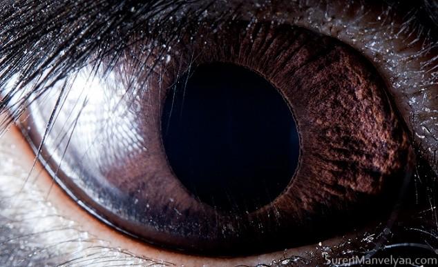 20 close-up photos of animal eyes show nature's wonderfully extreme ocular diversity Animal-Eyes-Rabbit-634x387