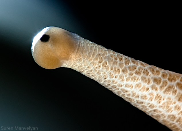 20 close-up photos of animal eyes show nature's wonderfully extreme ocular diversity Animal-Eyes-Snail-634x458