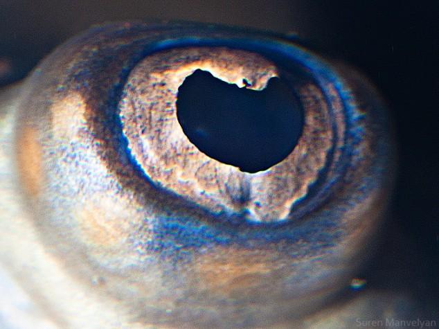 20 close-up photos of animal eyes show nature's wonderfully extreme ocular diversity Animal-Eyes-Stingray-634x475