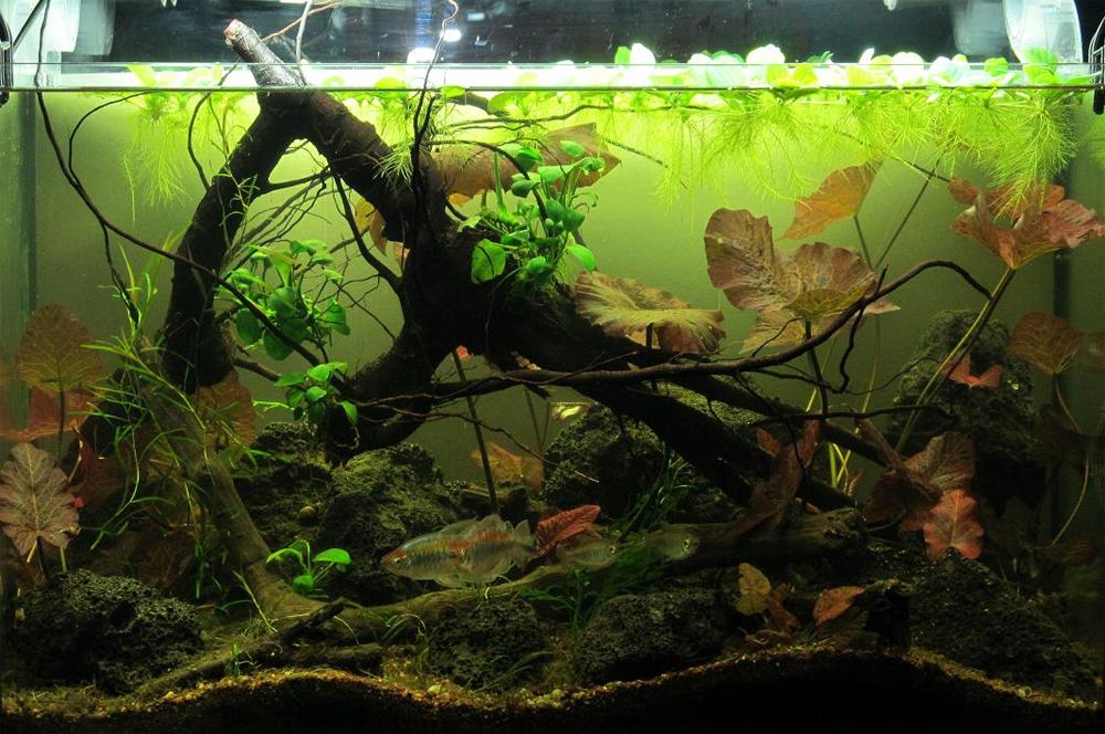 Конкурс тропических биотопов JBL 2013 Biotope-aquarium-c2013_99-1