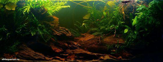 Конкурс дизайна биотопных аквариумов JBL 2014 Biotope-aquarium-design-contest-2014-AF-1-560x213