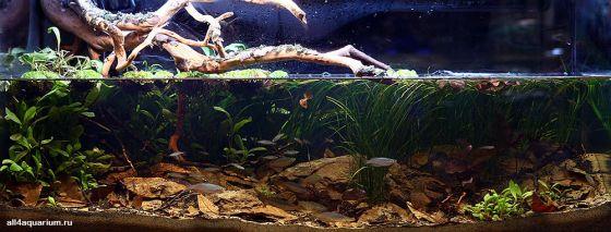 Конкурс дизайна биотопных аквариумов JBL 2014 Biotope-aquarium-design-contest-2014-AO-1-560x213