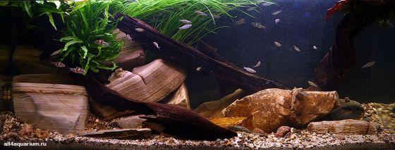 Конкурс дизайна биотопных аквариумов JBL 2014 Biotope-aquarium-design-contest-2014-EU-1-560x213