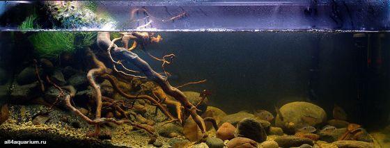 Конкурс дизайна биотопных аквариумов JBL 2014 Biotope-aquarium-design-contest-2014-NA-1-560x213