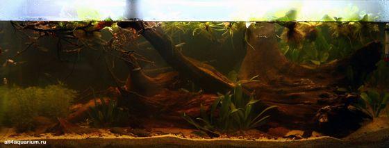 Конкурс дизайна биотопных аквариумов JBL 2014 Biotope-aquarium-design-contest-2014-SA-1-560x213