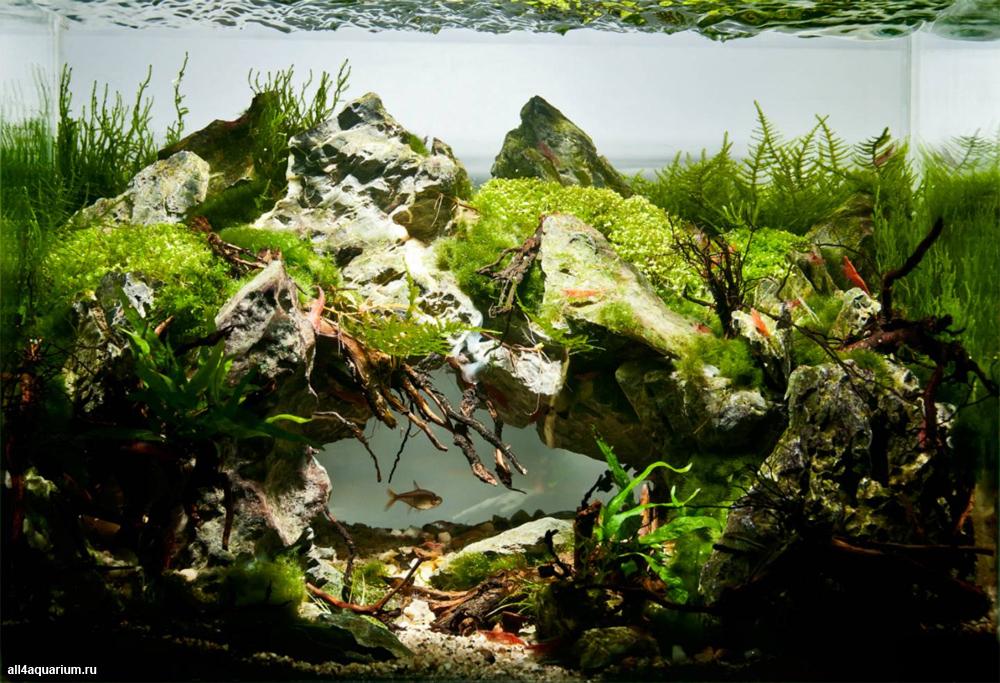 Конкурс аквариумного дизайна DENNERLE Scaper's Tank 2014 St-aquarium-design-contest-2014-n-5_0