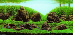Конкурс аквариумного дизайна регионов России 2014 Kadr_c_7
