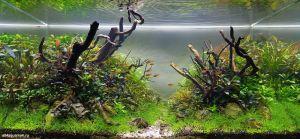 Конкурс аквариумного дизайна регионов России 2014 Kadr_e_5