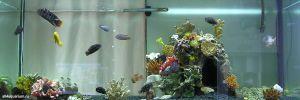 Конкурс аквариумного дизайна регионов России 2014 Kadr_n_2