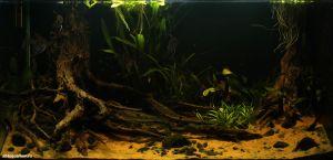 Конкурс аквариумного дизайна регионов России 2014 Kadr_n_7