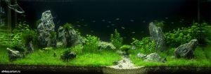 Конкурс аквариумного дизайна регионов России 2014 Kadr_s_5