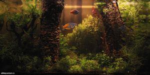 Конкурс аквариумного дизайна регионов России 2014 Kadr_w_9