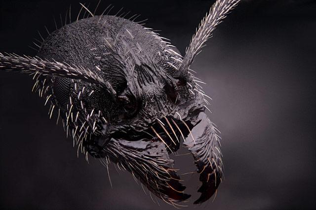 GOING UNDERGROUND : Hidden Bases Strange Experiments and Clandestine Civilizations : SUPER SOLDIER TALK Small-world-ant
