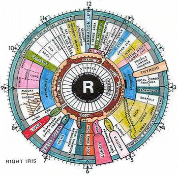 Santé bien être nutrition environnement / Health - Page 4 Iridology-chart