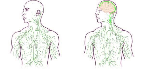 """""""They'll Have to Rewrite the Textbooks:"""" Scientists Discover the Missing Link Lymph"""