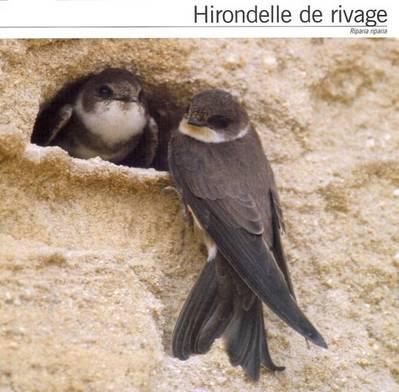 [Jeu] Association d'images - Page 19 Hirondelle_t