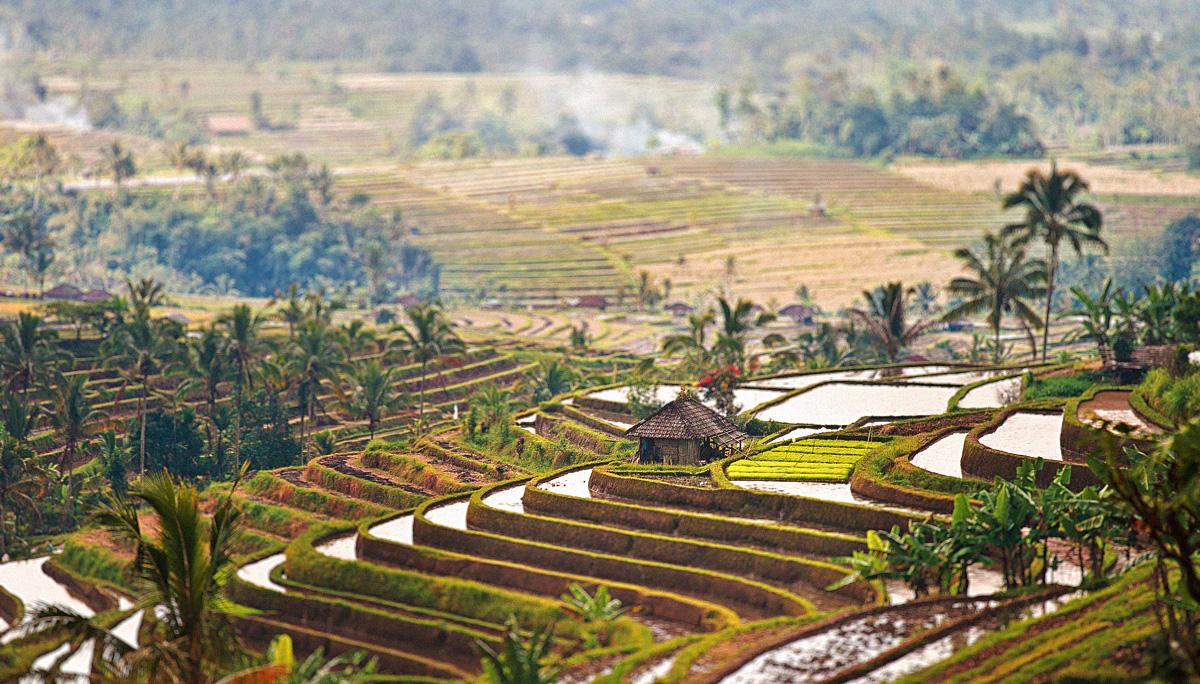 Bali 51