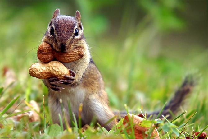 افتتاح حديقة حبيب الملايين العندليب الأسمر Cute_squirrels_11