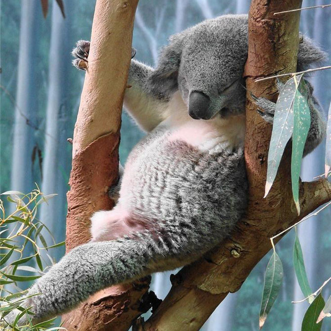 Vienkārši jaukas, skaistas un interesantas bildes par jebko - Page 2 Funny_sleeping_animals__