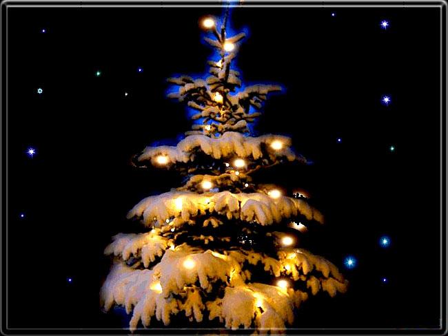 Urime Krishtëlindjet dhe Vitin e ri 2016 Beautiful_christmas_tree_pictures_17