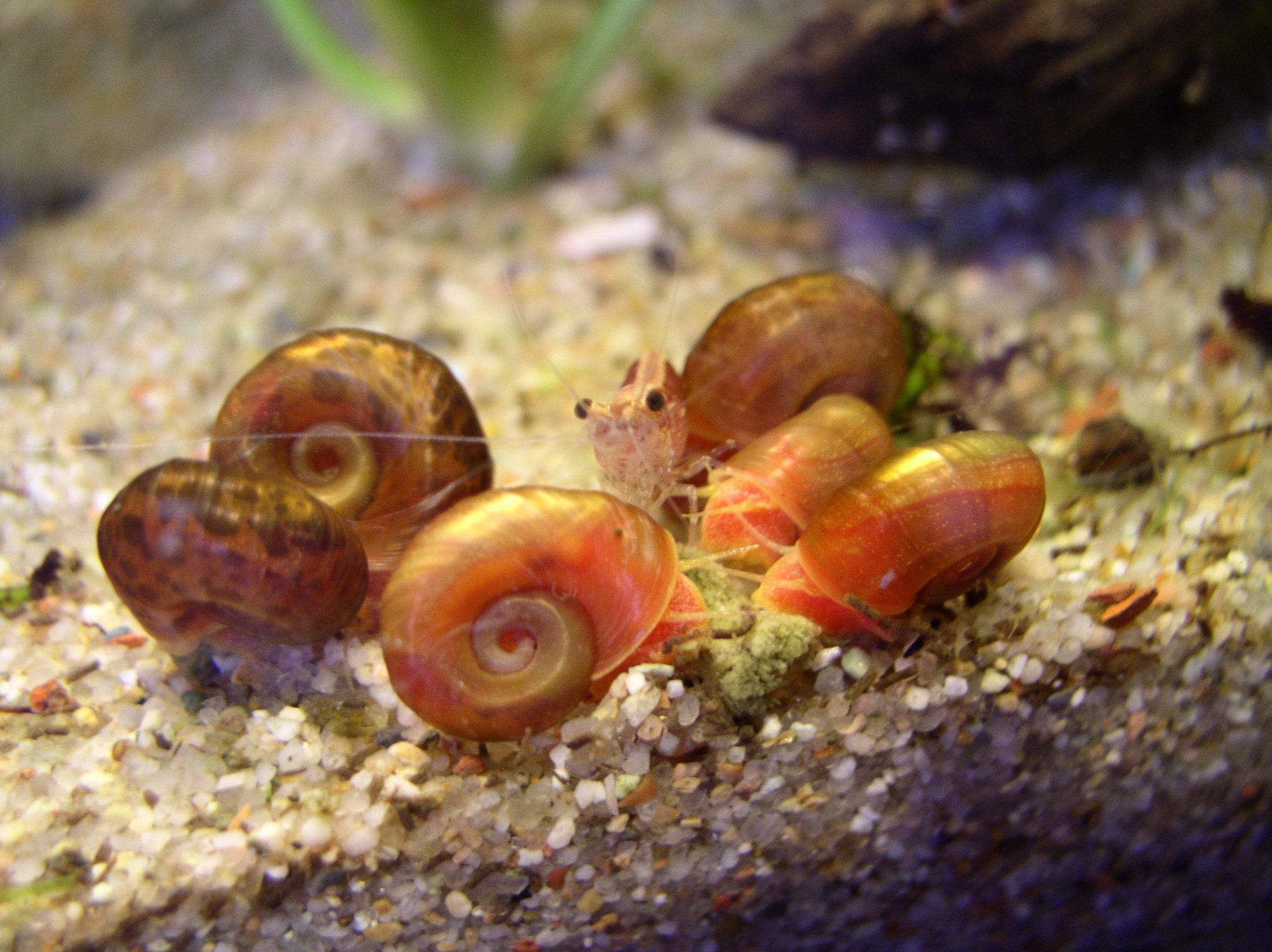 Demande de renseignements pour maintenance de crevettes sur sol technique La_guerre_du_vert