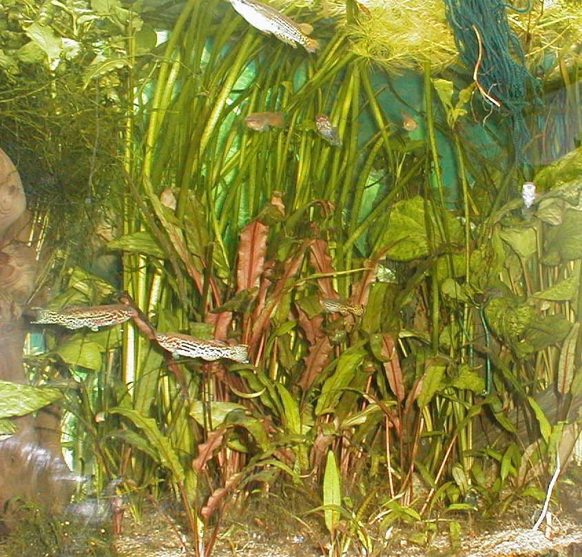 algues diverses et fertilisation besoin de conseils - Page 2 Bac_d_ensemble