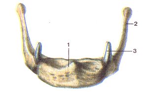 Кости черепа - Страница 2 40