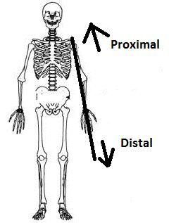 [เพิ่มเติม]วิธีเก็บตัวอย่างและการนำส่งชีววัตถุสำหรับตรวจ DNA Proximal-distal