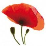 Язык цветов и их аромата Mak1-150x150