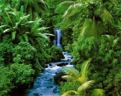 Sauvons les forêts tropicales. 4wrm5xui