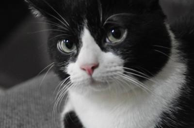 ¿A qué forero le tienes manía? Gato-feliz-8-e1430965972611
