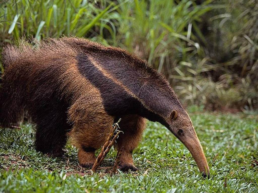 Le 421 du Cagouillard Anteater-3