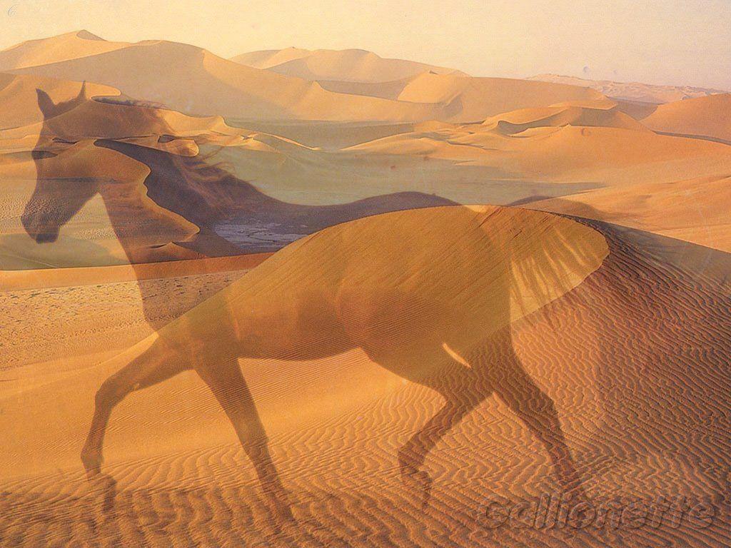 les chevaux.. - Page 4 J51bif56
