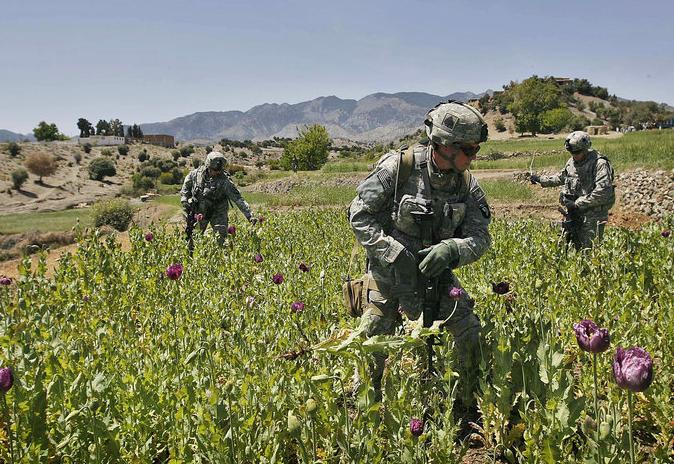 Afghanistan. La production d'héroïne a été multipliée par quarante depuis l'intervention de l'OTAN Afghanistan-opium-fields