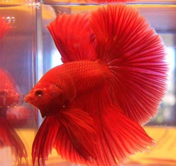 Un petit sondage sur nos poissons les photos du sondage!!! 2fq48xfv