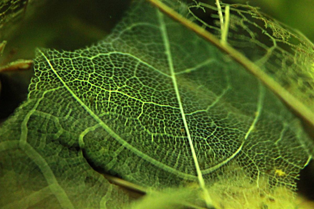Nano (réserve naturelle) Feuille02