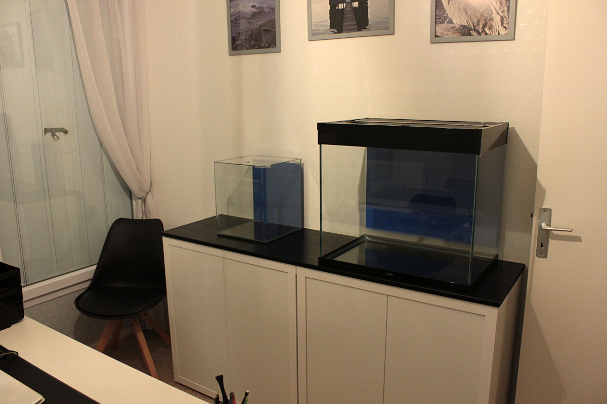 Stomias - Bac V4 Aquariums