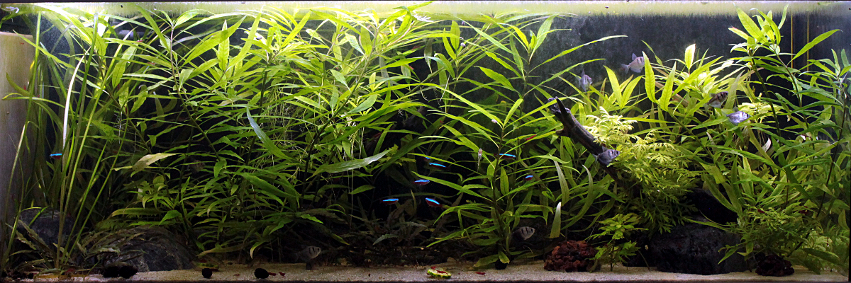 L'aquariophilie: une bonne thérapie Bac08092018
