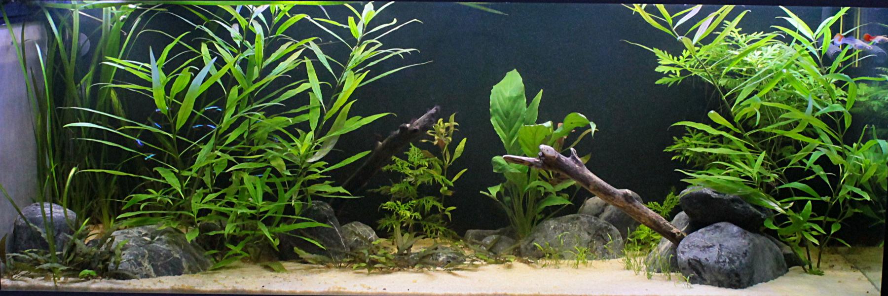 L'aquariophilie: une bonne thérapie Bac25042018