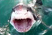 بحث عن القرش 0406s