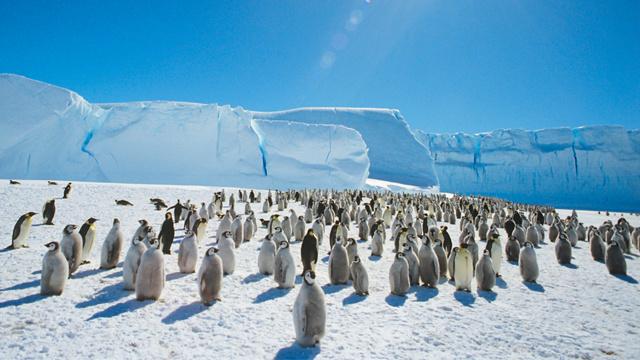 البراكين كانت ملجأ للكائنات الحية في العصور الجليدية 703461