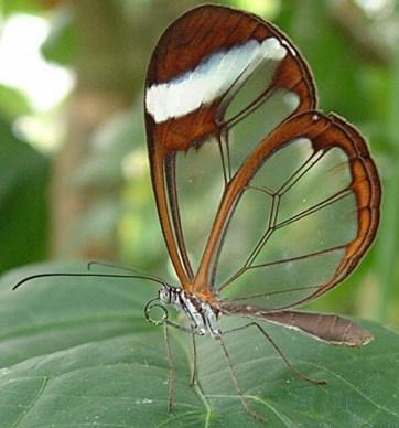 superbes papillons! - Page 3 Faux-papillons-1