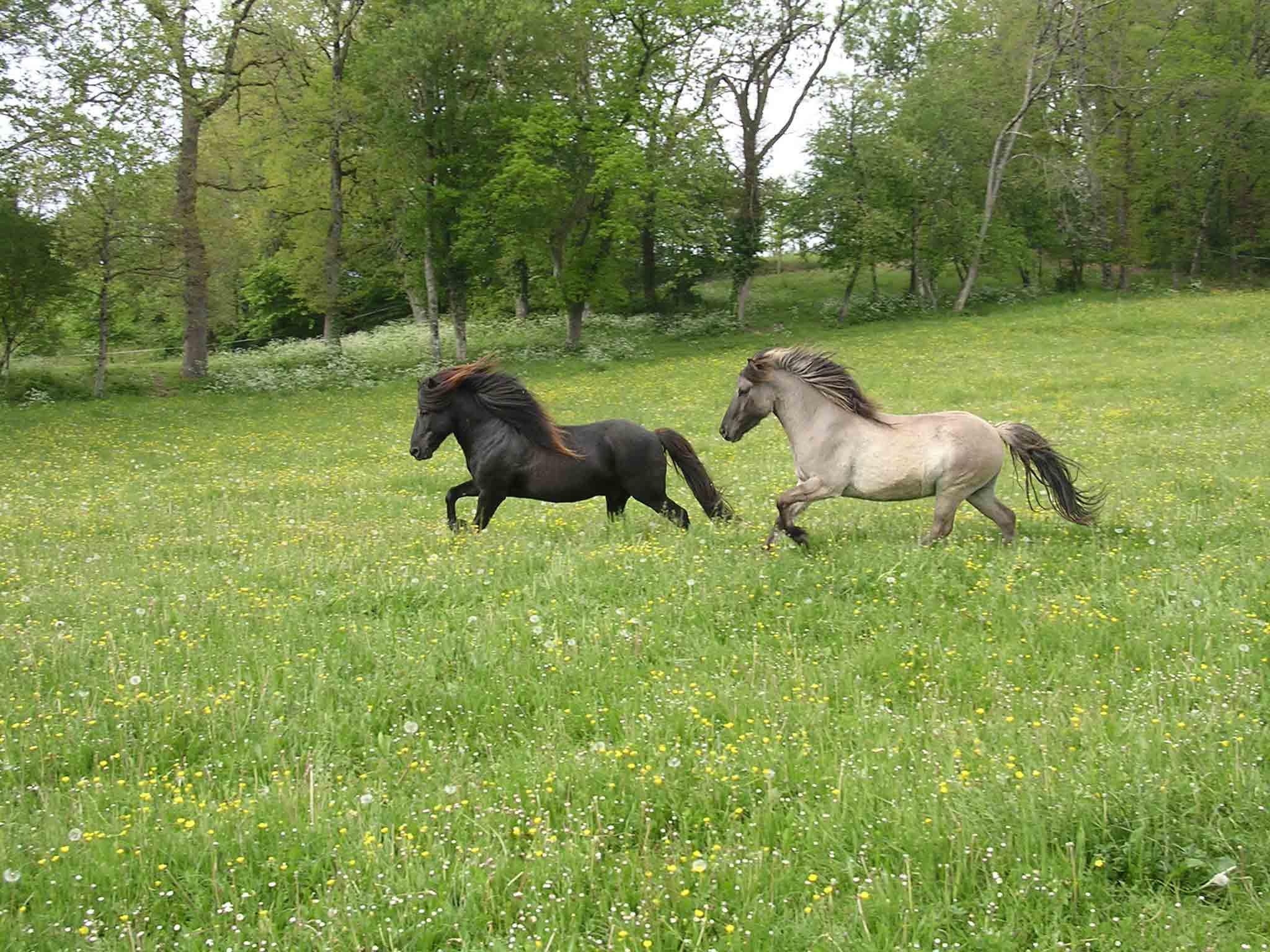 les chevaux.. - Page 16 Chevaux