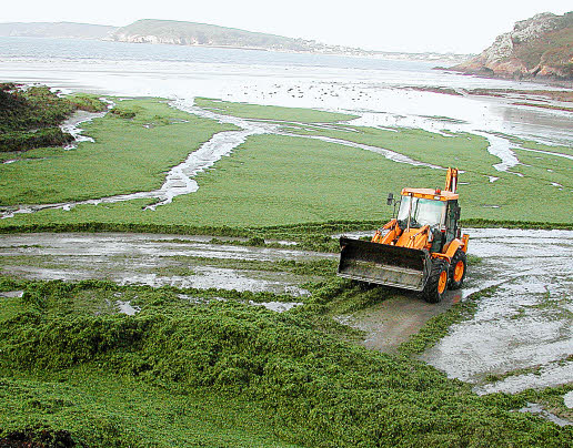 La Bretagne, ça vous gagne Algues-vertes