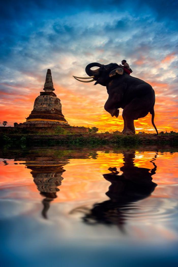 Bienvenidos al nuevo foro de apoyo a Noe #326 / 31.07.16 ~ 14.08.16 - Página 6 Circuit-en-thailande-sculpture-d%C3%A9l%C3%A9phant-g%C3%A9ant