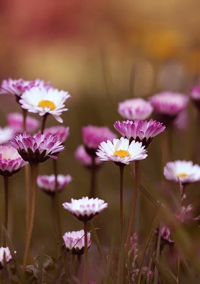 Jeudi 14 avril Formidable-image-de-la-nature-voir-les-plus-belles-photos-du-monde-jaime