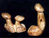 Jedini svetski muzej penisa Fal2
